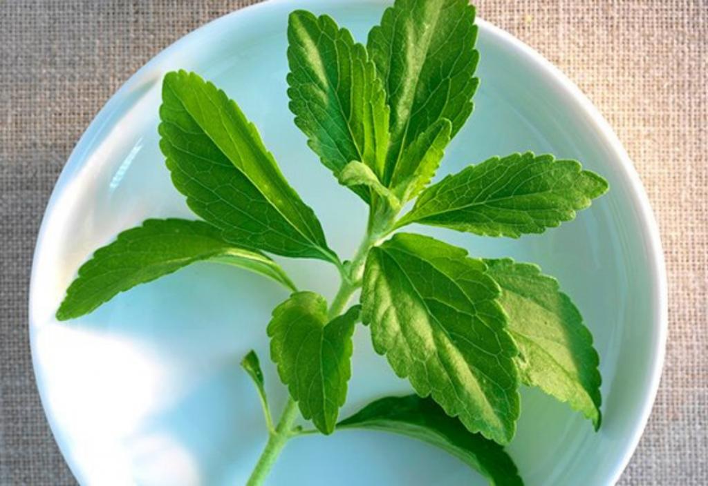 is stevia bad